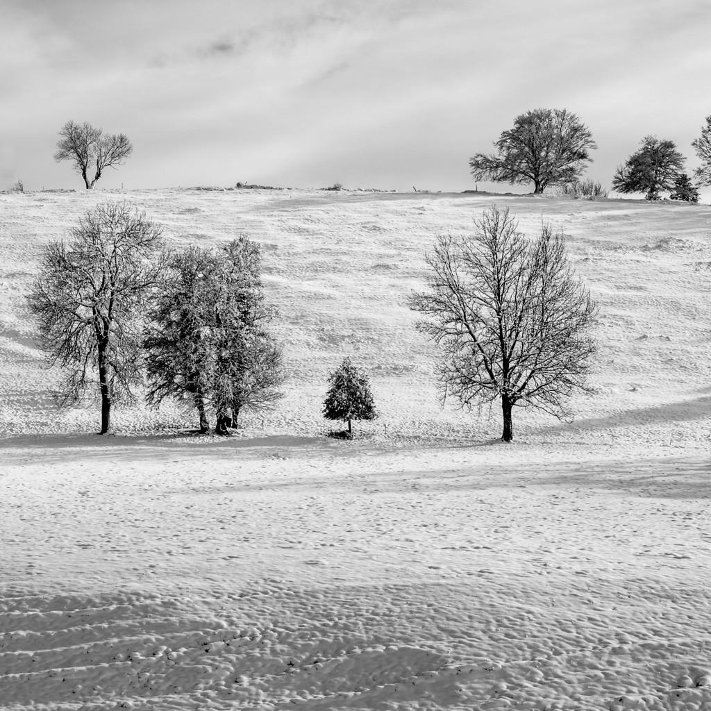 Schneeschuhe Testsieger 2020/21: Die besten 7 Schneeschuhe im Vergleich